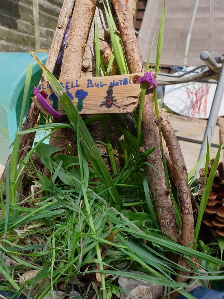 Bluebell Bug Hotel